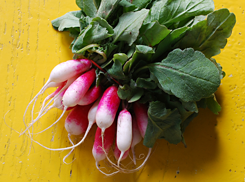 french-radishes