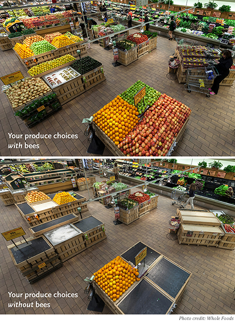 whole-foods-bees-releasephoto