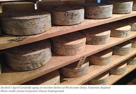cheese aging on wooden shelves, Jeanne Carpenter